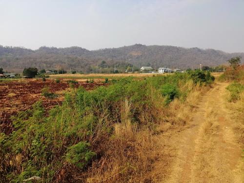 ที่ดิน29-1-94ไร่  ช่องสาริกา อ.พัฒนานิคม ลพบุรี