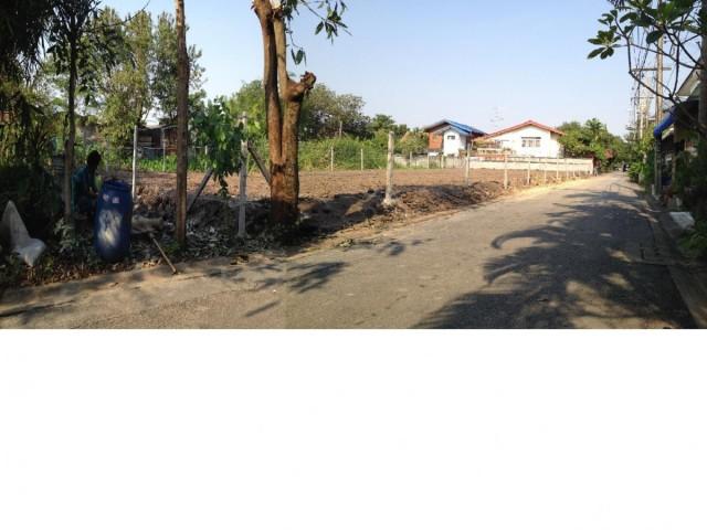 PR960ขายด่วนที่ดิน พุทธมณฑลสาย1 ซอย49 เนื้อที่169 ตรว. ถมแล้วสูงกว่าถนน50ซม. ปลูกกล้วยเรียบร้อย